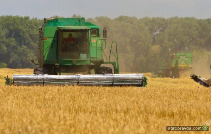 Собраны первые 10,5 тыс. тонн озимой пшеницы