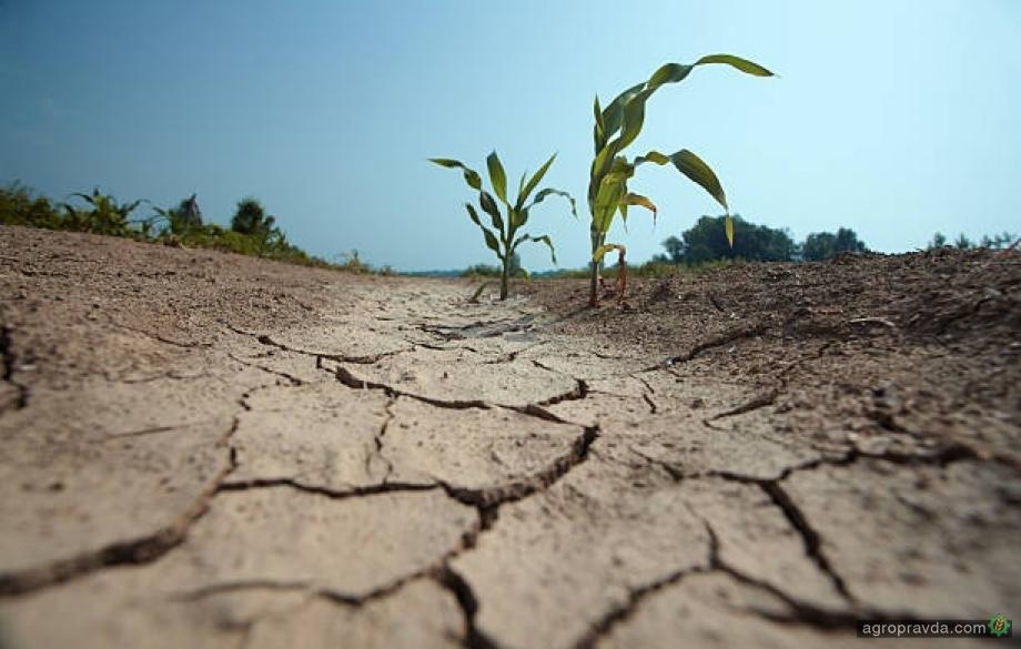 В Украине 50% с/х земель находятся в состоянии засухи