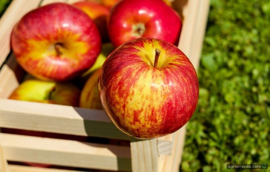 Вступил в силу запрет на поставки яблок, груши и томатов из Украины в Евросоюз