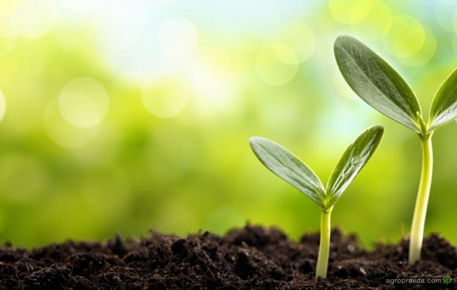 Как ускорить развитие растений при поздних сроках посева культур