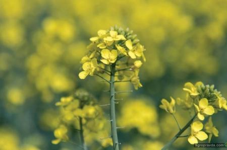 Какие спецпредложения действуют на семена и СЗР для аграриев