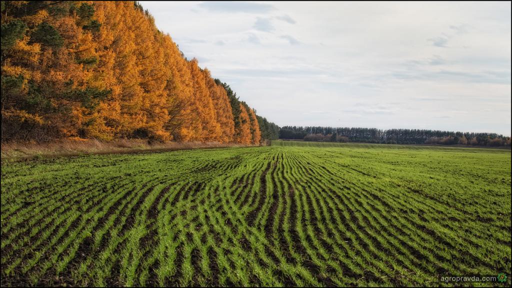 Делегация Ставрополья посетилаII Всемирный зерновой форум
