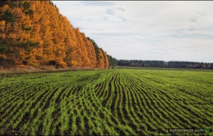 Оборот сельхозземель будут согласовывать с общественностью