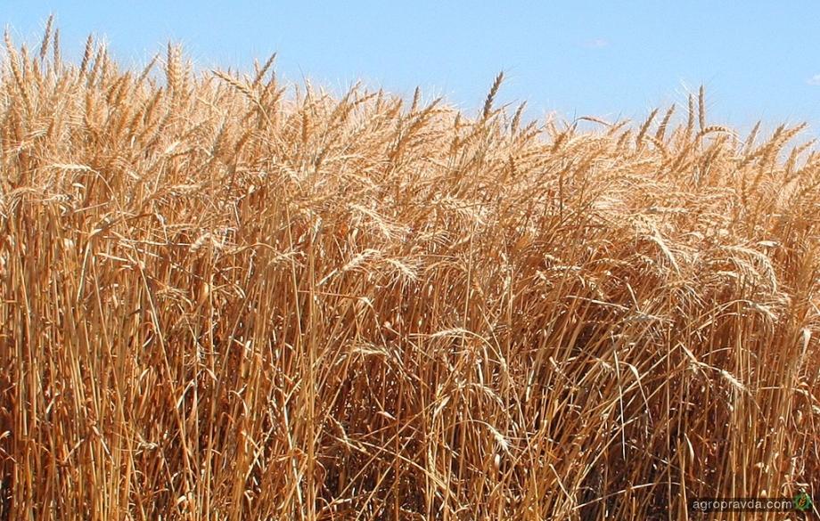 Мнение: агротехнология в условиях Слобожанщины