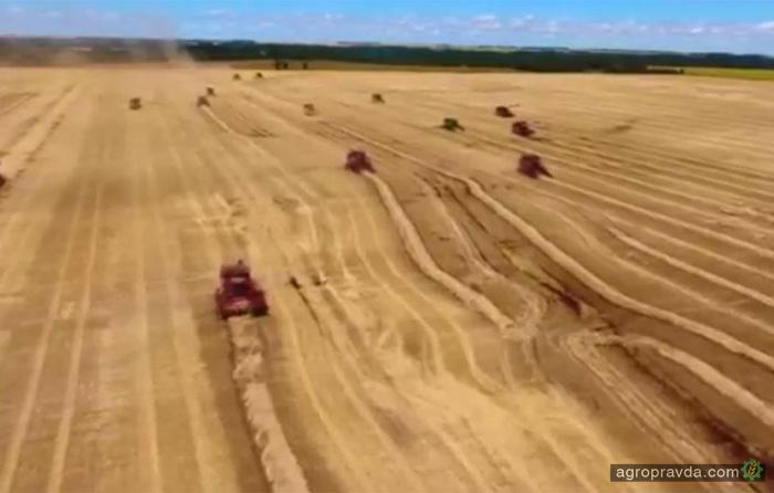 Уборка риса комбайном Case IH 7130 на полях Украины. Видео