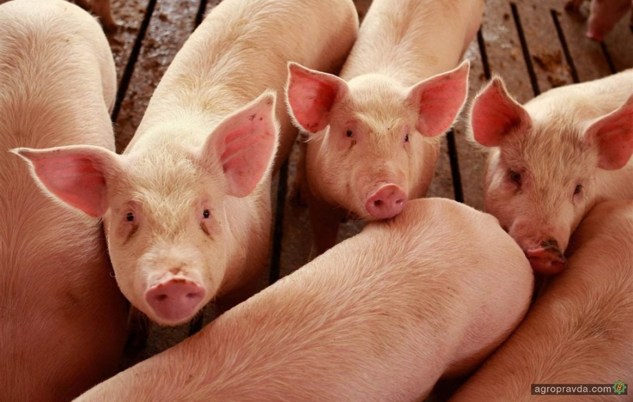 Ситуация на рынке зерновых ударила по животноводам