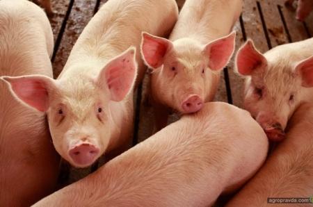 Прямой посев, животноводство, овощи и ягоды: опыт СФГ «Чайка-2»