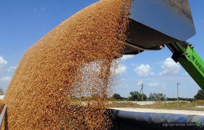 Активная уборка урожая опускает цены на пшеницу
