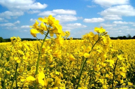 В Украине могут увеличить штрафы за загрязнение сельхозземель