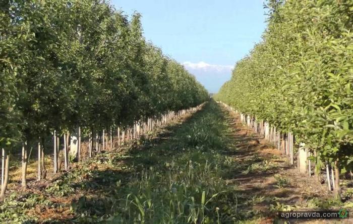Налоговые новации могут уничтожить украинское садоводство