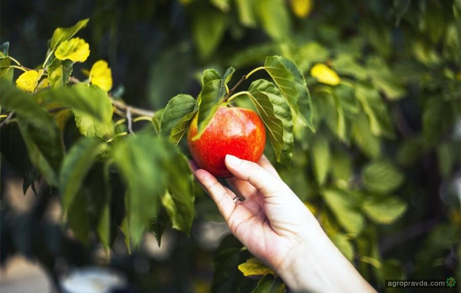 Чем защитить интенсивный сад от вредителей во второй половине вегетации