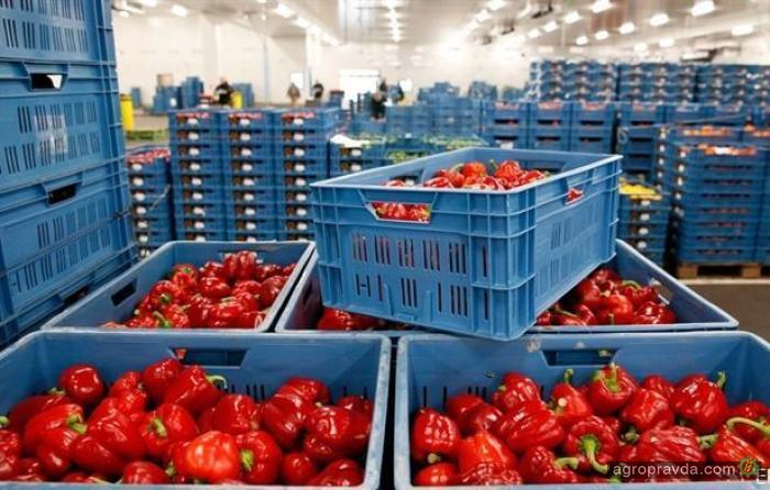Украина увеличила импорт агропродукции из ЕС