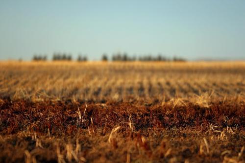 Эффект от дерегуляции в аграрной отрасли составит 10 млрд грн