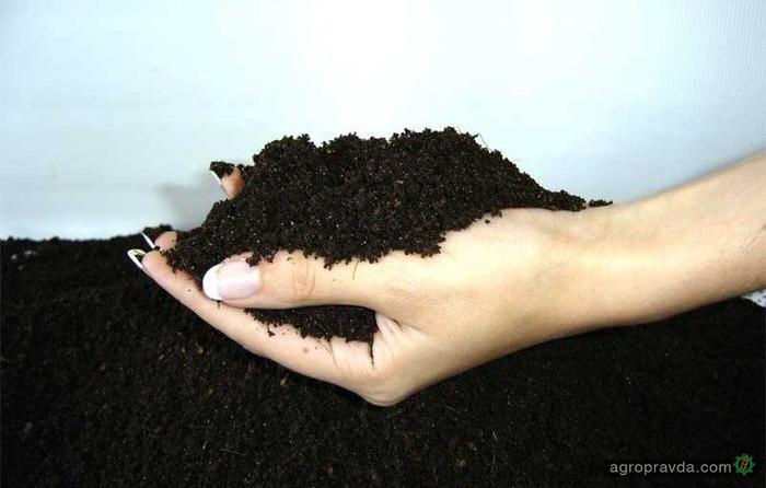 Как правильно отобрать пробы почвы под посев озимого рап