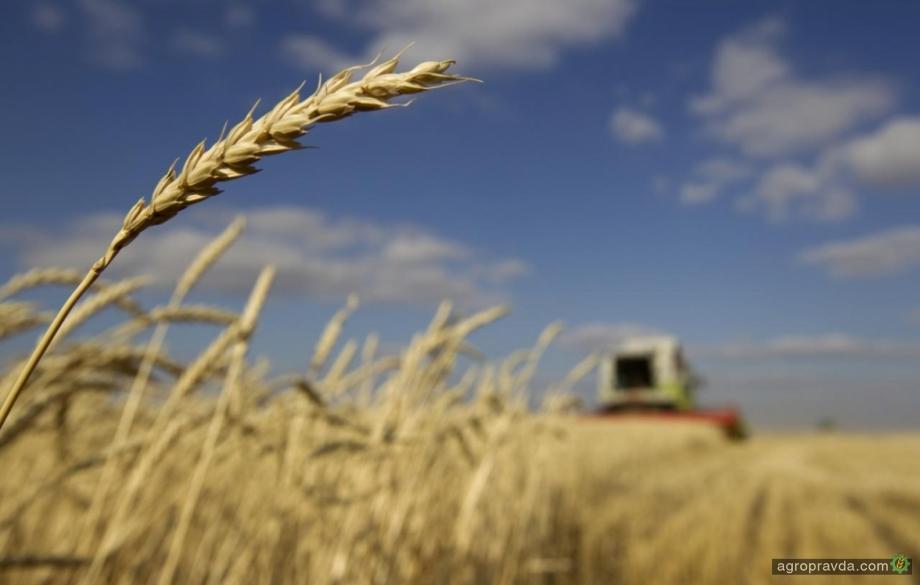 Темпы уборки зерновых на 21% превышают прошлогодние