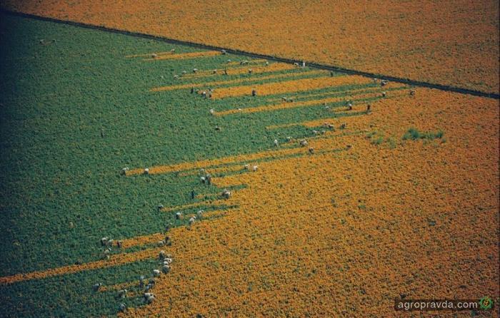 В Украине сельхозземли ушли «в тень»