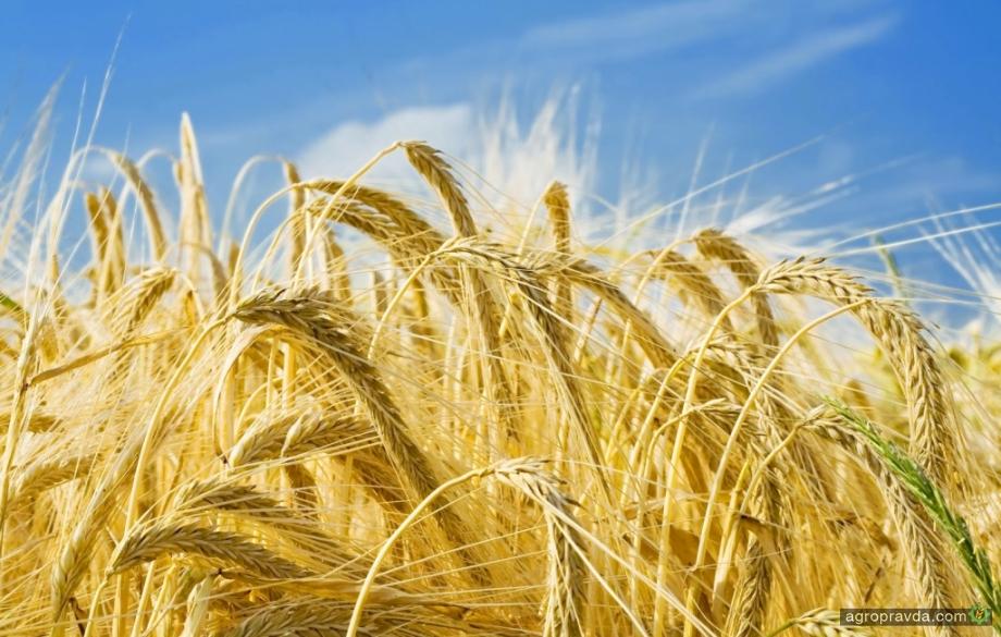 Цены на ячмень нового урожая превысили цены на пшеницу