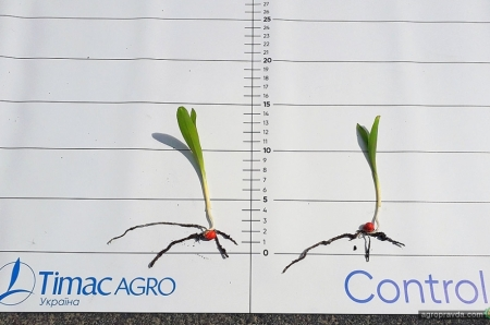 Как показали себя гранулированные удобрения Eurofertil 35 на кукурузе. Фото