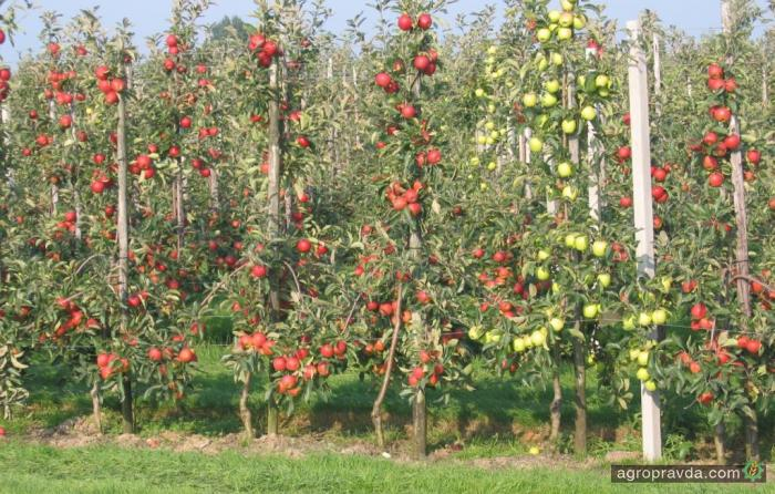 В Украине выдана первая аграрная расписка для садоводов