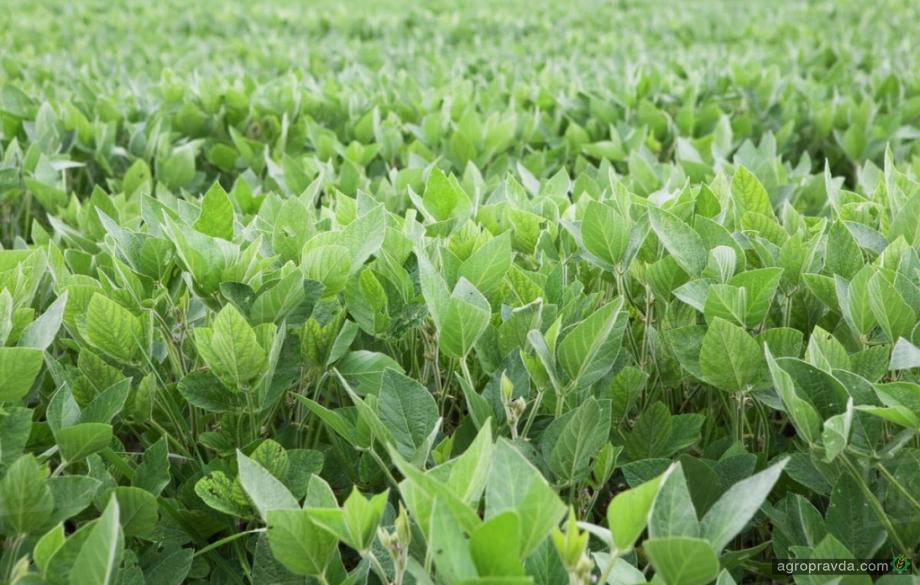 Как собирать по 3,5 т/га сои без гербицидов и удобрений