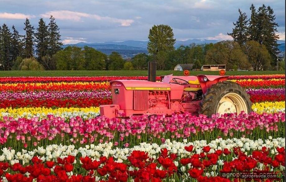 Сельхозтехника принарядилась к 8 марта. Фото