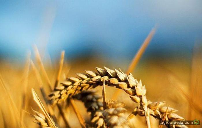 Саудовская Аравия хочет купить один из крупнейших украинских агрохолдингов