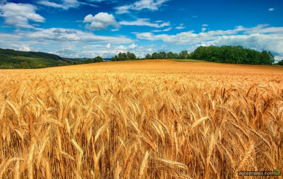 Почему нельзя открывать рынок земли: мнение фермера