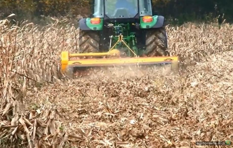 Осенью нужно расправиться с кукурузным стеблевым мотыльком