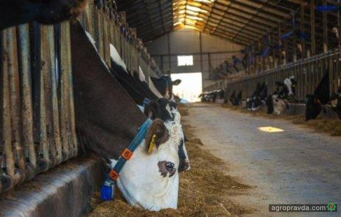В ветеринарной медицине начинают наводить порядок