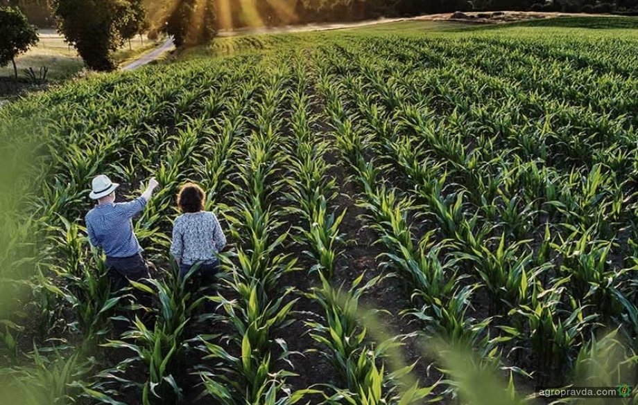 KWS выходит на рынок семян овощных культур