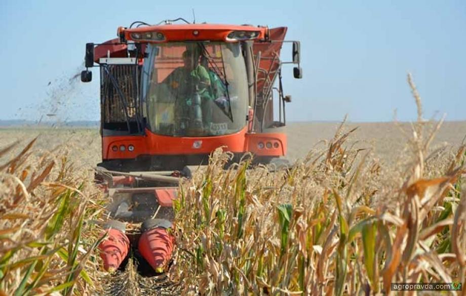 Ristone Holdings начал сев озимой пшеницы