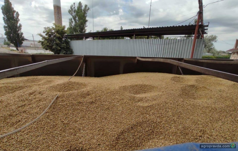 Зерновые терминалы начинают приемку зерна нового урожая