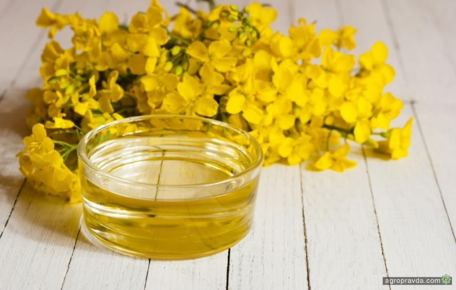 Содержание масла в урожае рапса беспрецедентно низкое