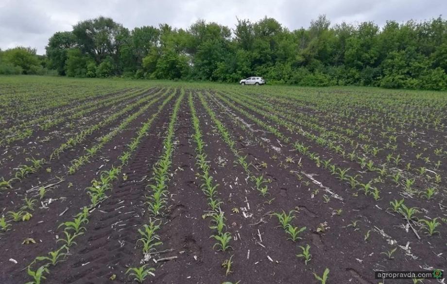 Стоимость сельхозземли повысится за счет снятия ограничений на покупку