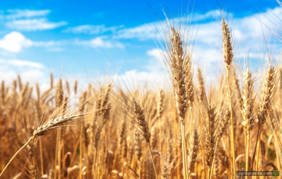 Урожайность в Донецкой области выросла в полтора раза