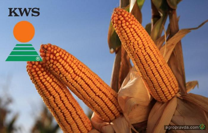 АСА «Астра» предлагает гибриды кукурузы и подсолнечника «КВС» по акционной цене
