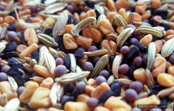 Как изменился рынок семян в Украине