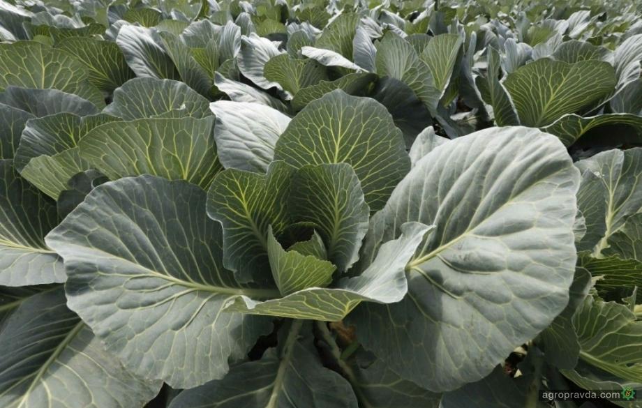 Украина сохранила место в ТОП-3 экспортеров агропродукции в ЕС