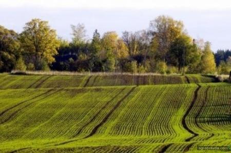 Зачем Рада хочет ввести новый налог перед открытием рынка земли: две альтернативы