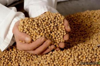 Изменение режима НДС экспорта сои может привести к потерям