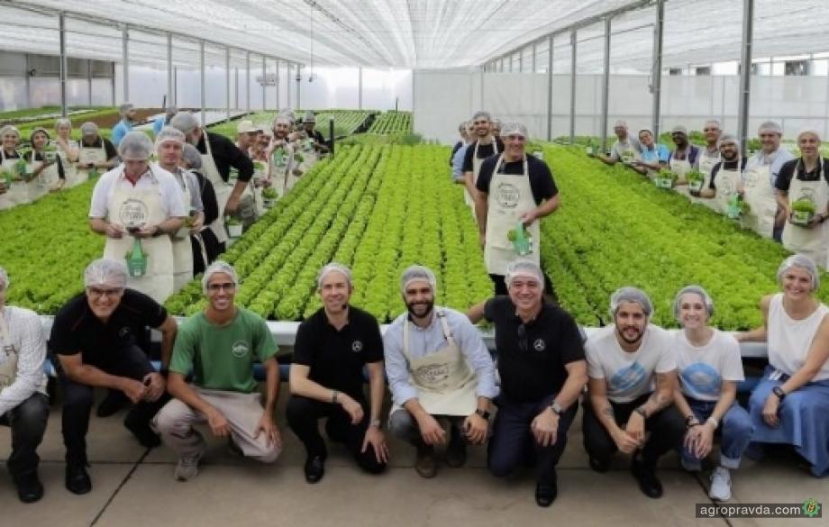 На заводе Mercedes-Benz будут выращивать помидоры