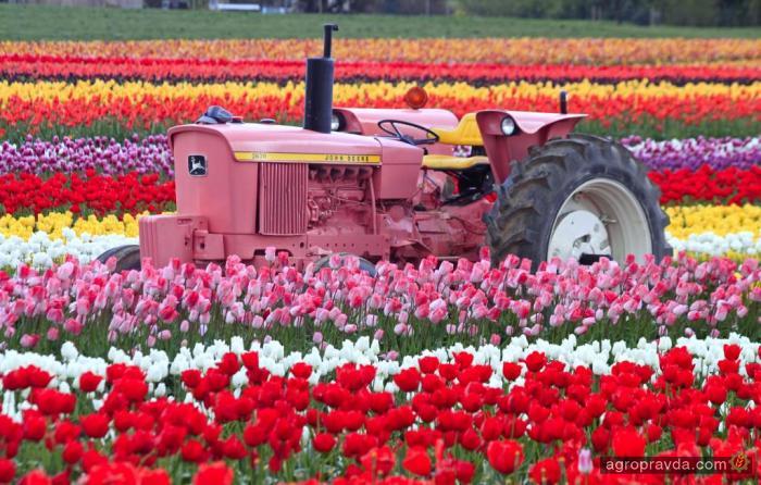 Тракторы принарядились к 8 марта. Фото