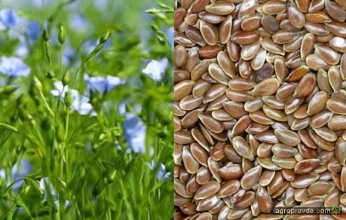 Минагрополитики определило кто может проводить экспертизу сортов растений