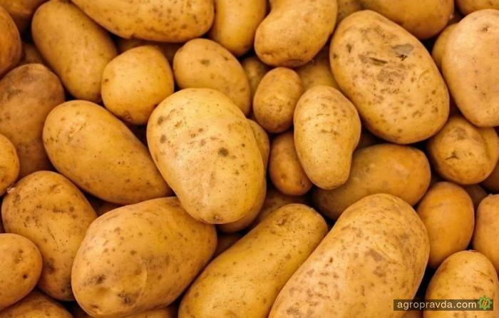 Украина в 2 раза увеличила экспорт картофеля