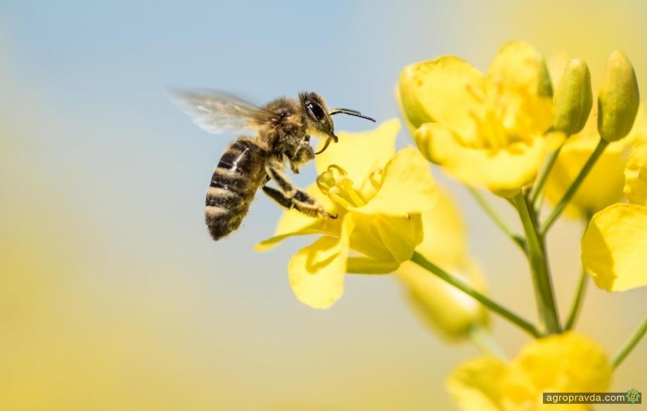 В Штатах пчелы будут разносить новый биофунгицид
