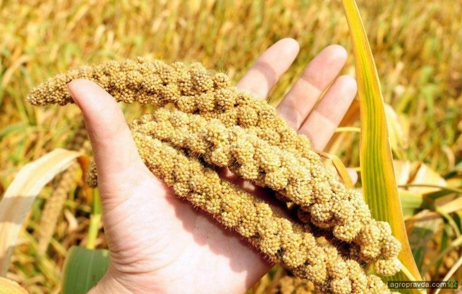 Названа самая рентабельная сельхозкультура 2019 г.