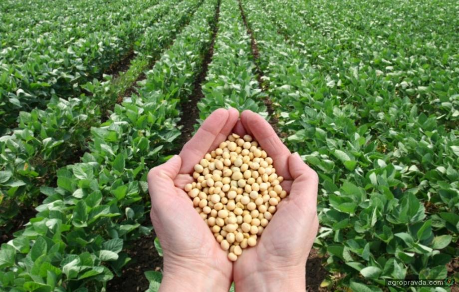 Названы ТОП-20 производителей семян