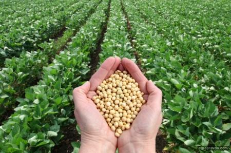 Гербициды для озимых культур. Пшеница. Часть 1
