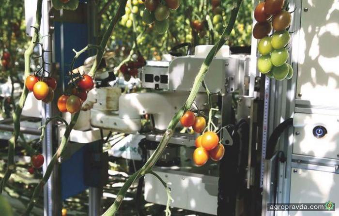 В Японии тестируют роботов для сбора томатов