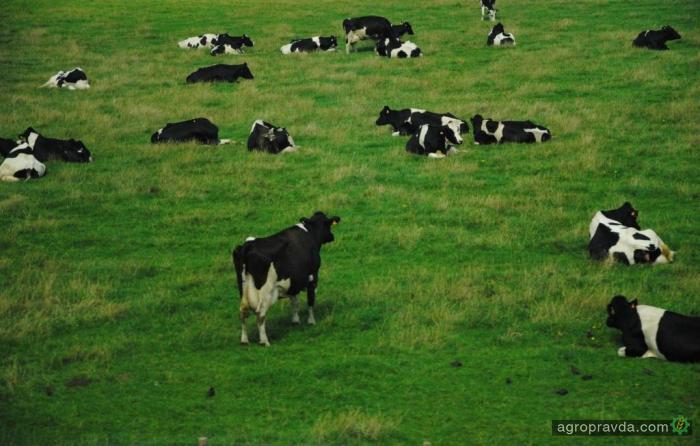 Ассоциация животноводов требует отменить мониторинг налоговых накладных